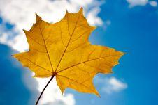 Free Autumn Leaf Stock Photography - 16121492