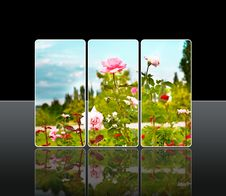 Reflection Roses Royalty Free Stock Images