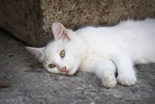 Free Little Cat Stock Photo - 16122300