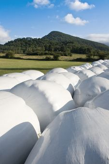 Hay Balls In White Plastic Cover Wrap Bales Stock Photography