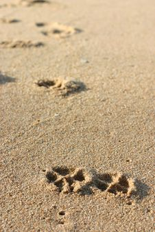 Free Dog Footprints On The Sand Stock Photos - 16125363