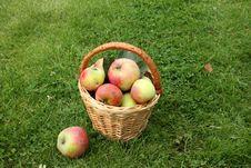 Free Apples Stock Photo - 16125670