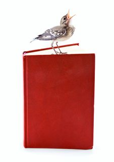 Nestling Of Bird (wagtail) On Book Stock Image