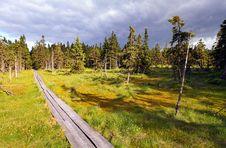 Free Bog In Krkonose Royalty Free Stock Images - 16126199