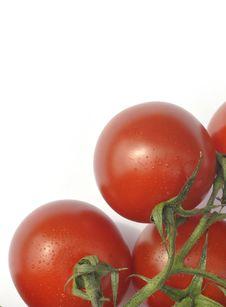 Free Ripe Vine Tomatoes Stock Image - 16126231