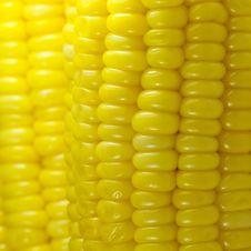 Free Sweet Corn Background Royalty Free Stock Photos - 16126768