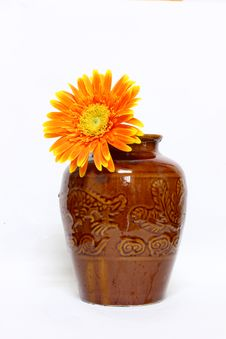 Orange Gerbera Stock Images