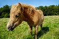 Free Foal Eating Royalty Free Stock Image - 16147816