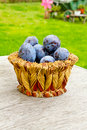Free Plums Stock Image - 16149781