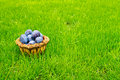 Free Plums Royalty Free Stock Photo - 16149805