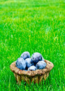 Free Plums Stock Image - 16149811