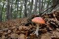 Free Autumn Mushroom Stock Photo - 16149930