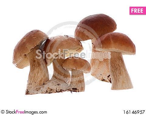 Free Mushrooms Royalty Free Stock Photography - 16146957