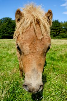 Free Horse Face Stock Photography - 16147802