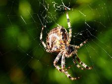 Free Spider Stock Photos - 16148563
