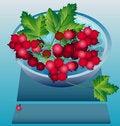 Free Berry Imagination Stock Photos - 16151293