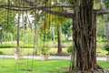 Free Big Old Banyan Tree. Royalty Free Stock Photos - 16158108