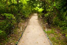 Free Path Through The Jungle Stock Photos - 16150773
