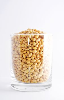 Free Soybean Stock Photography - 16151192