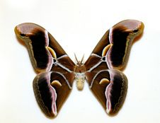 Free Butterfly Stock Photography - 16153252