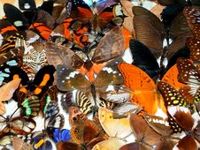 Free Collection Of Butterflies Stock Photography - 16153332