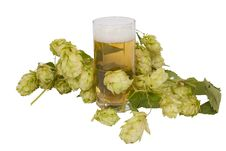 Free Beer In Glass With Hop Cones Stock Photos - 16155353