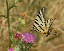 Free Yellow Butterfly Stock Photos - 16155613
