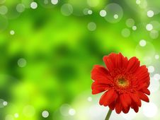 Free Gerbera Stock Photos - 16156523