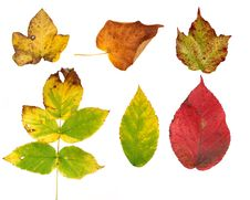 Free Autumn Leaves Royalty Free Stock Images - 16156559