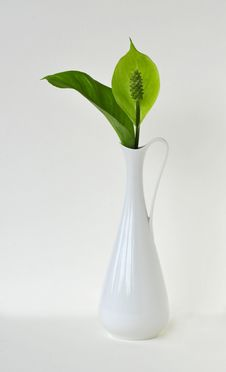 Free Green Peace Lilly Stock Images - 16157624