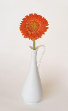 Orange Gerbera In A Vase Royalty Free Stock Photo