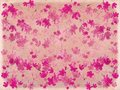 Free Pink Blossom Flower On Parchment Stock Photos - 16169023
