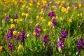 Free Flowering Meadow Stock Image - 16169081