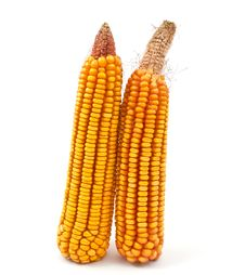 Free Yellow Corn Royalty Free Stock Photos - 16160088