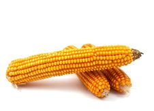 Free Yellow Corn Stock Photography - 16160122