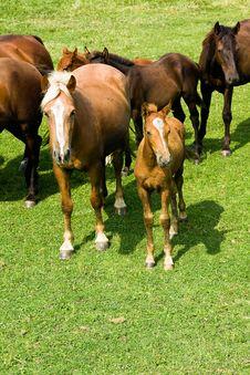 Free Horses Royalty Free Stock Photo - 16160295