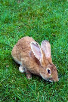 Free Rabbit On A Grass Stock Photography - 16160412