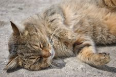 Free Cat Sleeping On The Ground Royalty Free Stock Photo - 16162385