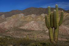 Free Column Cacti In High Mountain Area Stock Photo - 16164360