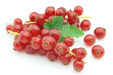 Free Currant Stock Images - 16164454