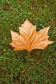 Free Beautiful Autumn Leaf Stock Photography - 16164712