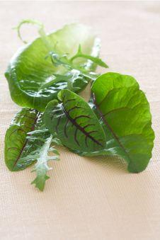 Salad Greens Royalty Free Stock Photography