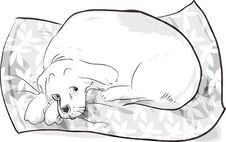 Free Dog On Cushion Royalty Free Stock Photography - 16164837