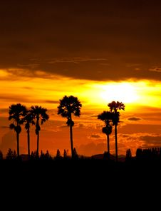 Free Sunset At Palm Tree Stock Photography - 16165552