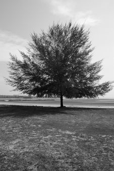 Free Lonely Tree With Strong Spirit Royalty Free Stock Photos - 16165628