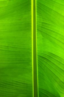 Free Close-up Of A Tropical Leaf Stock Photos - 16168123