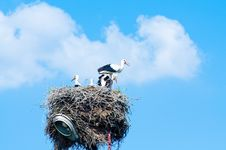 Free Stork Family In Straw Nest Royalty Free Stock Photography - 16168507