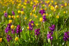 Free Flowering Meadow Stock Image - 16169081