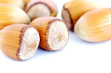 Free Hazel Nuts On White Royalty Free Stock Images - 16169299
