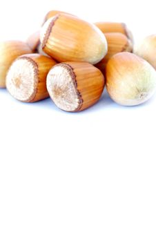 Free Hazel Nuts On White Stock Image - 16169331